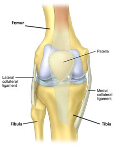 Diagram demonstrating the ligaments of the knee
